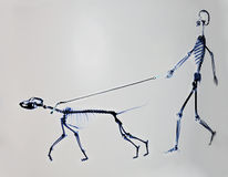 Squelette de chien et d'homme photo stock