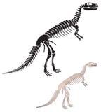 Squelette de dinosaur illustration libre de droits