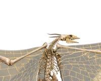 Squelette de dragon à un arrière-plan blanc images stock