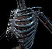 Squelette de fer illustration libre de droits