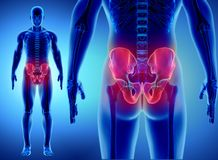 Squelette de hanche sur le fond bleu Image stock