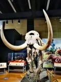 Squelette de Musée National d'Australie de mastodonte américain @ photo libre de droits