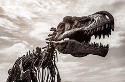 Squelette de rex de tyrannosaure photographie stock libre de droits