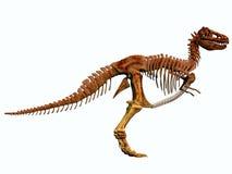 Squelette de T-Rex illustration libre de droits