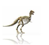 Squelette de T-rex Images libres de droits
