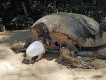 Squelette de tortue de mer photographie stock libre de droits