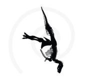 squelette de trex de dinosaures Photo stock