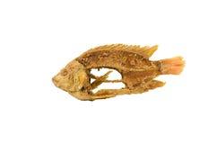 Squelette des poissons Image libre de droits