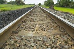 Squelette humain d'ami doux sur le chemin de fer Photos stock