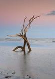Squelette la Caroline du Sud d'arbre de plage de folie Photo libre de droits