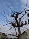 Squelette mort d'arbre images stock