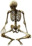 Squelette posé Photo libre de droits