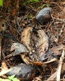 Squelettes de poisson-chat sur le rivage photo libre de droits