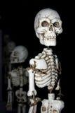 Squelettes tous dans une ligne Images stock