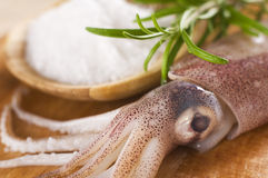 Free Squid Stock Images - 10169424