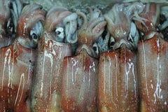Squid Royalty Free Stock Photos