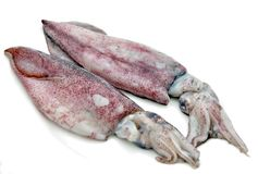 Squid Royalty Free Stock Image