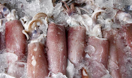 Squid. The fresh squid is seafood from south of Thailand, it's the good nutrition Royalty Free Stock Image