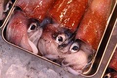 Squid Stock Image