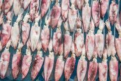 squid Arkivfoto