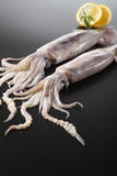 Squid. In two squid and lemon on black background stock photos