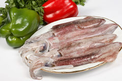 Squid Stock Photos