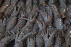 squid Royaltyfri Foto