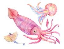 Squid, batoidea, jellyfish. Sea set illustration. Squid, batoidea, jellyfish. Sea set, watercolor illustration isolated on white Stock Image