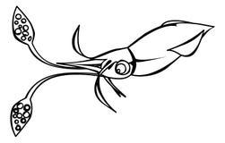 Squid Stock Images