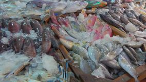 Squid, crab, lobster and various varieties of fish. In the showcase of the fish market stock video footage