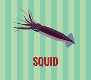 Squid - drawing on green background. vector illustration