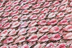 Squid drying on net Stock Photo