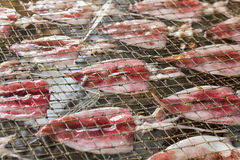 Squid drying on net Royalty Free Stock Photos