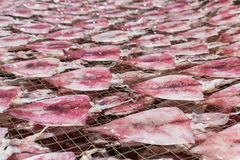 Squid drying on net Royalty Free Stock Photography