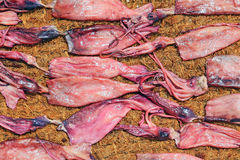 Squid Drying In The Sun Royalty Free Stock Images
