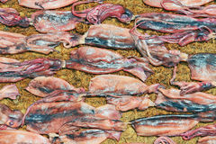 Squid Drying In The Sun Royalty Free Stock Photography