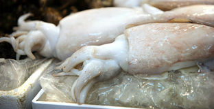 Squid.Fish market in South Korea Royalty Free Stock Photo