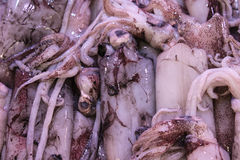 Squid Stock Photo