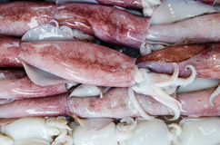 Squid Stock Image