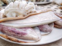 Raw squid Stock Photos