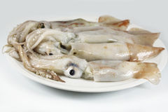 Squid fresh, raw Royalty Free Stock Photo