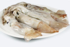 Squid fresh, raw Royalty Free Stock Photos