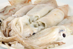 Squid fresh, raw Royalty Free Stock Image
