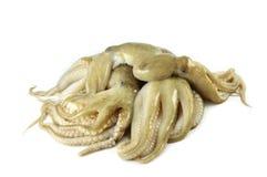 Squid. Fresh squid on white background stock photo