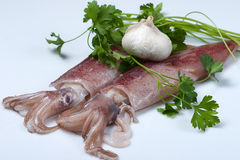 Squid garlic and parsley Stock Photo