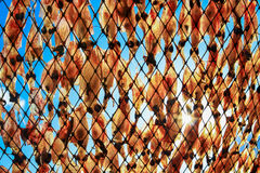 Squid hanging to dry. Dried squid. Dried Squid, traditional drying squid in fishing Stock Photos