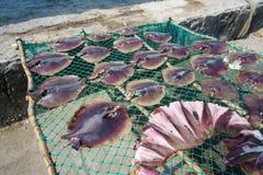 Squid lay on net Stock Photos
