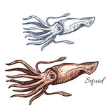 Squid marine animal sketch for seafood design Royalty Free Stock Images
