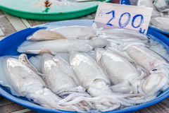 Squid in market Royalty Free Stock Photos