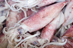 Squid at marketplace Royalty Free Stock Image